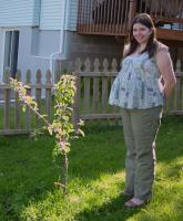 37 weeks and an apple tree
