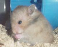 Sumomo ~1 month